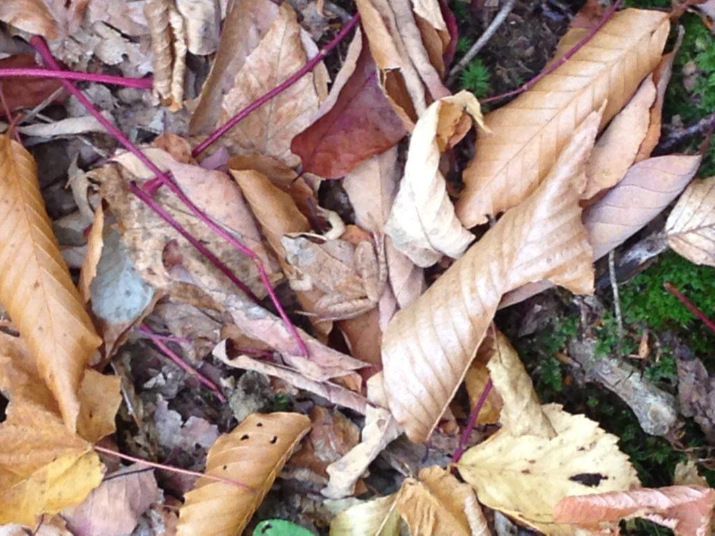 Fall explorations