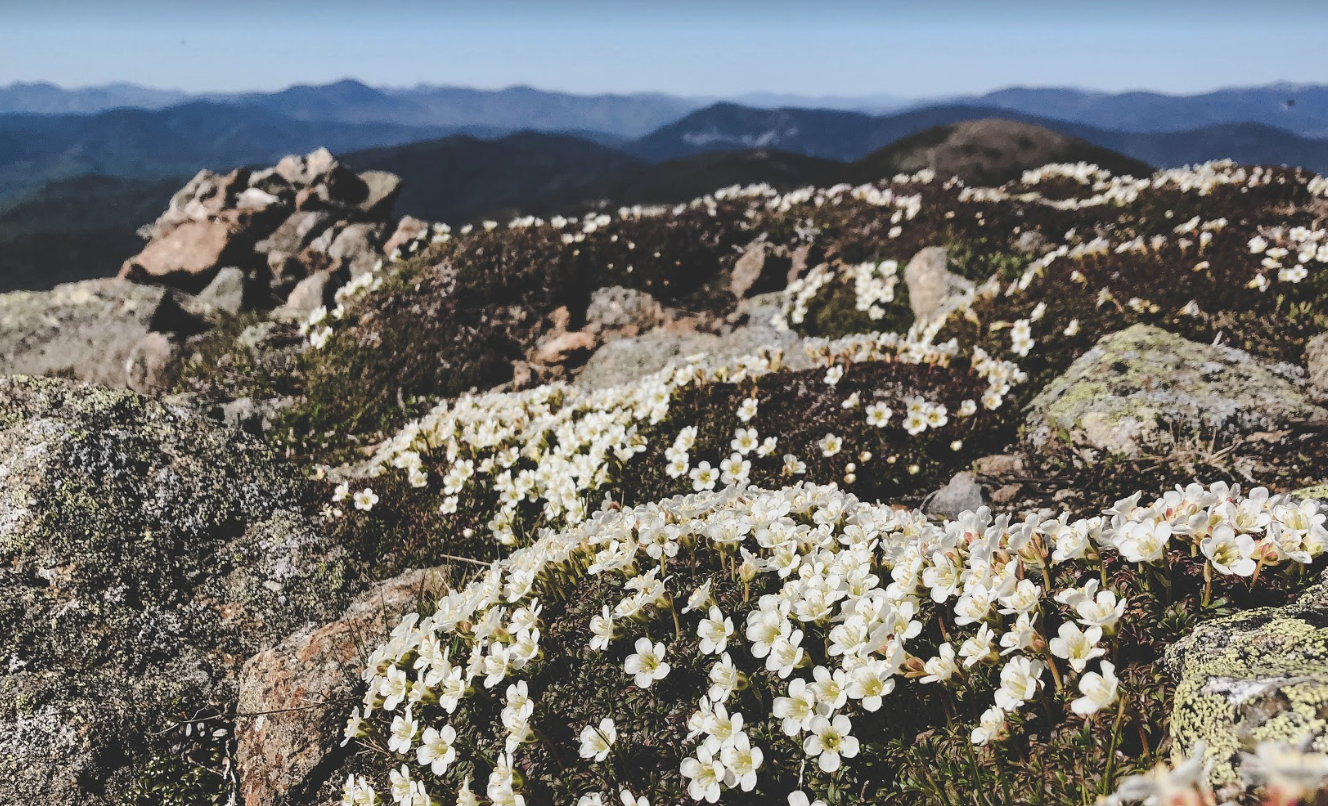 Help Track the Spring Alpine Bloom